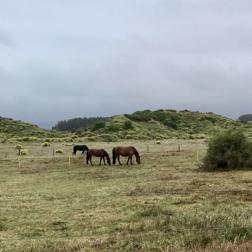 3 horses grazing in a paddock.