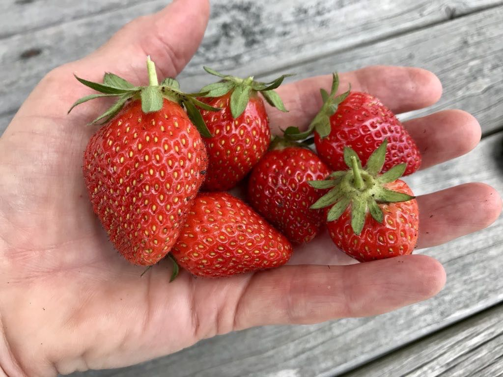 Half a dozen strawberries