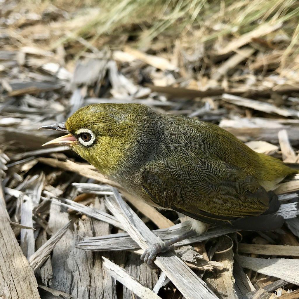 Small bird on the ground.
