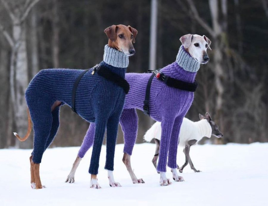 Two greyhounds in a snowy landscape, wearing elegant, rollneck sweaters. A third smaller dog, also in a sweater, is nearby.