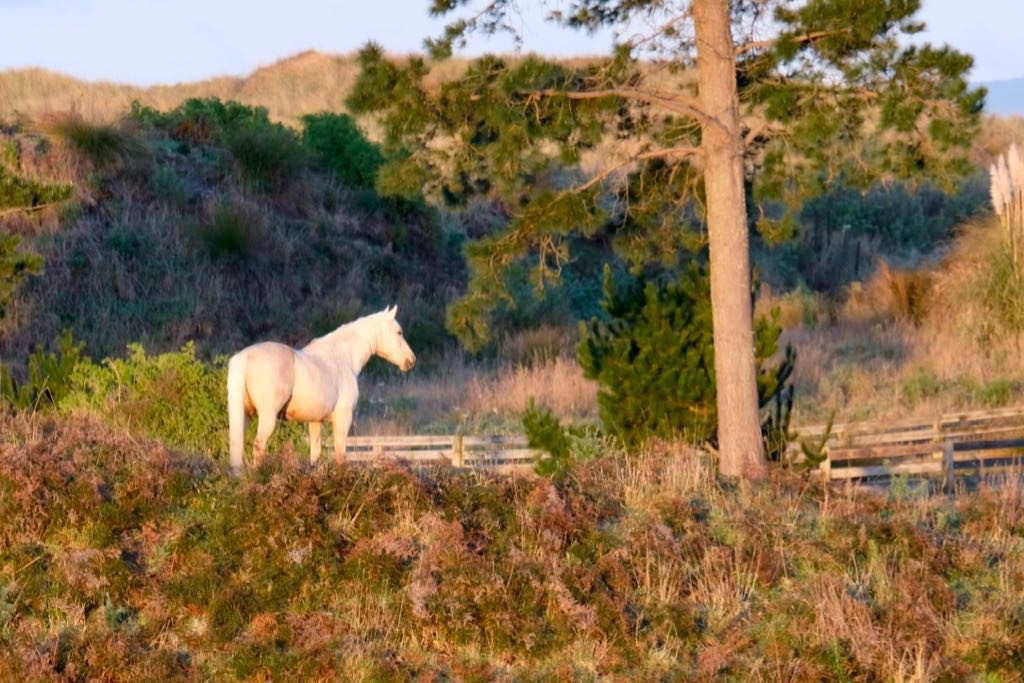 White horse standing in the sun near a tree in brown coloured paddocks.