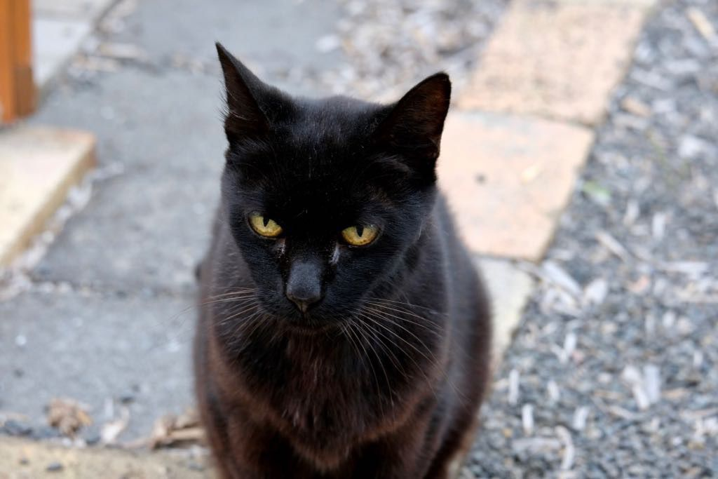 Black cat sitting on bricks facing the camera.