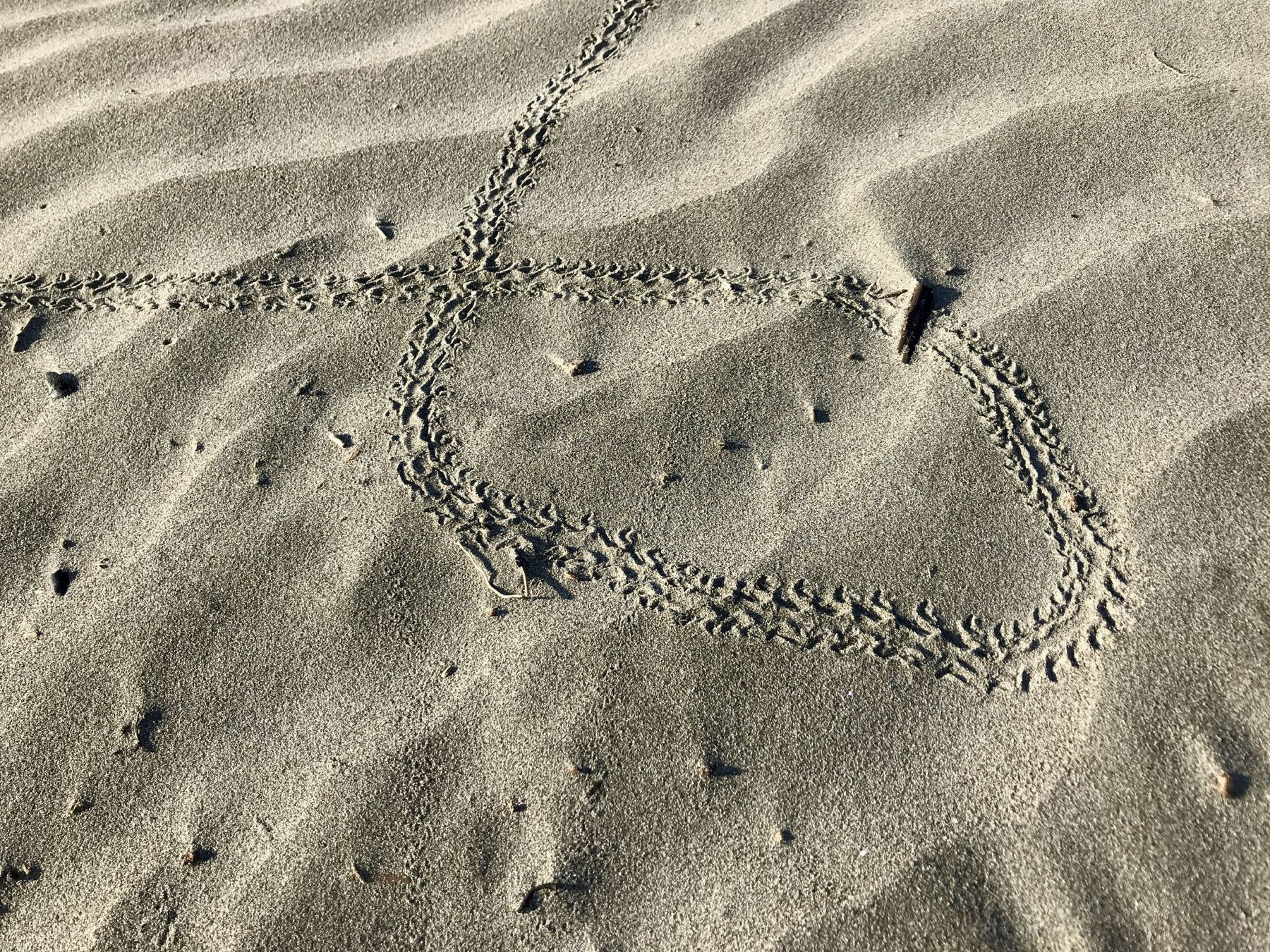 Tracks in the sand at the beach - perhaps a crab.