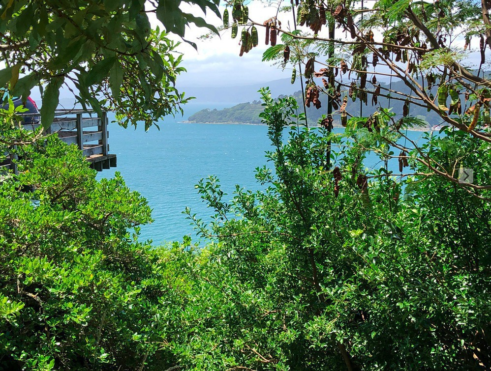 View of bush and harbour from Maida Vale Steps in Wellington, New Zealand.