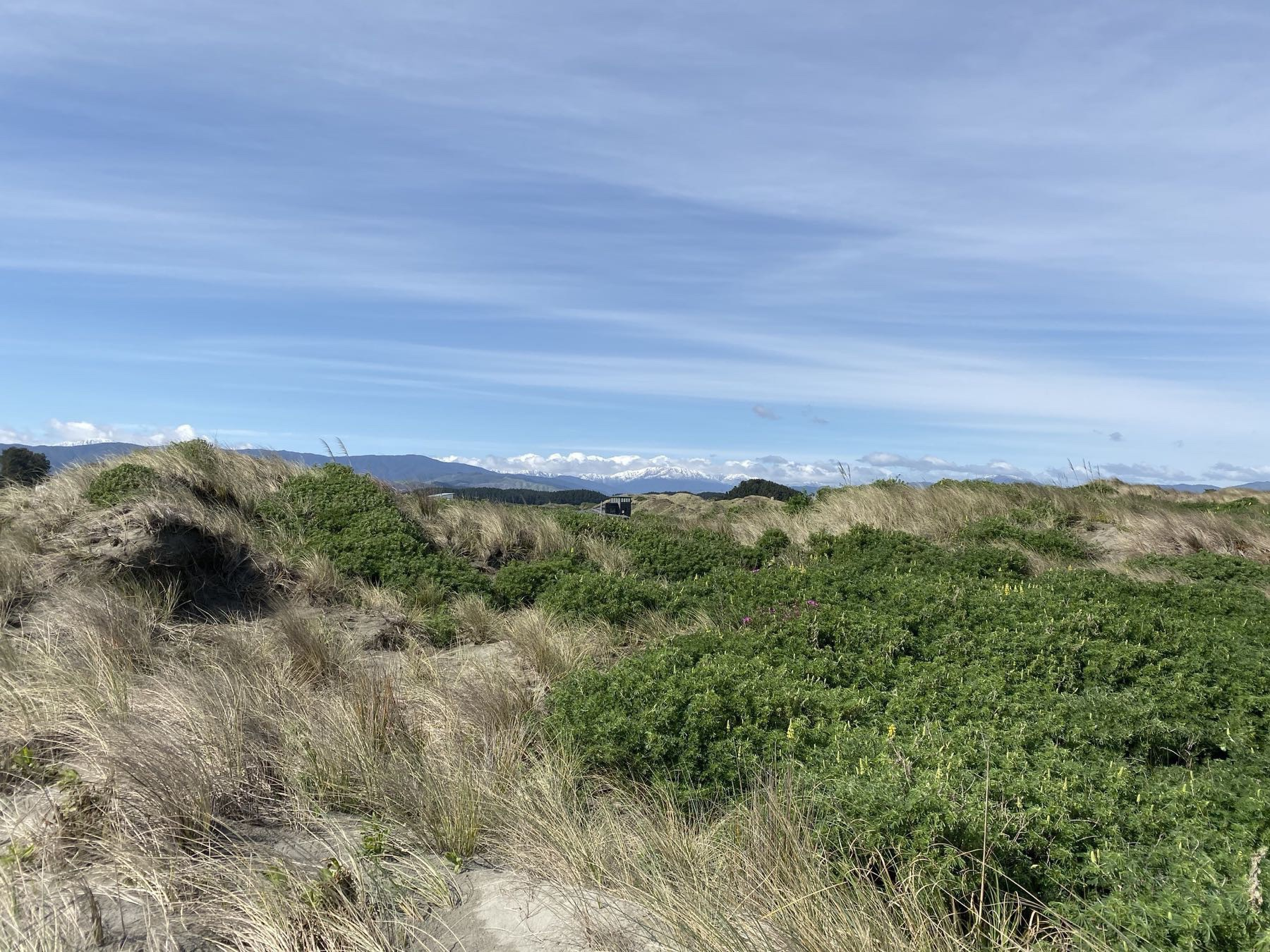 Snow-topped mountain behind sand dunes.