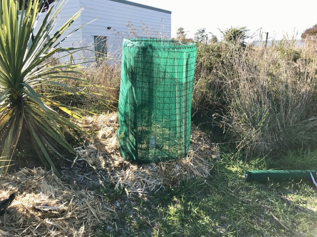 The young tree protected by wind cloth wrapped round plastic netting around 4 stakes.