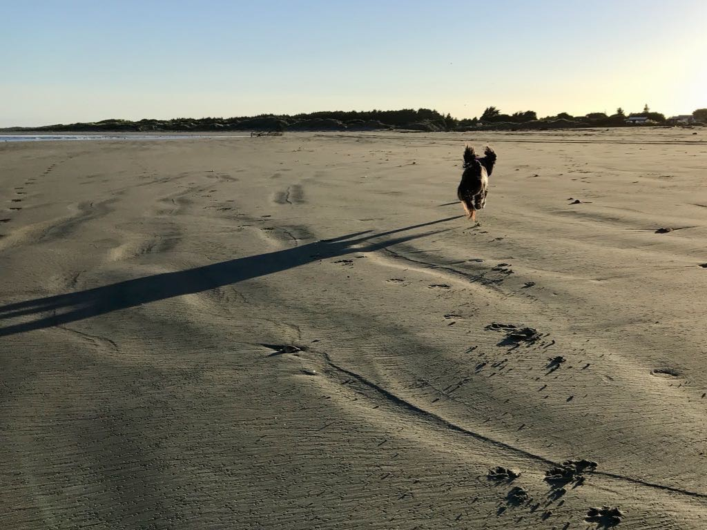Small black dog running on the beach, ears flying and with a long shadow.