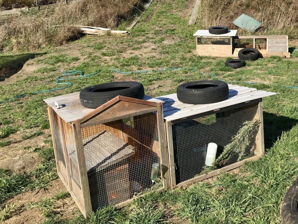 Two separate quail hutches and runs on a grassy area.