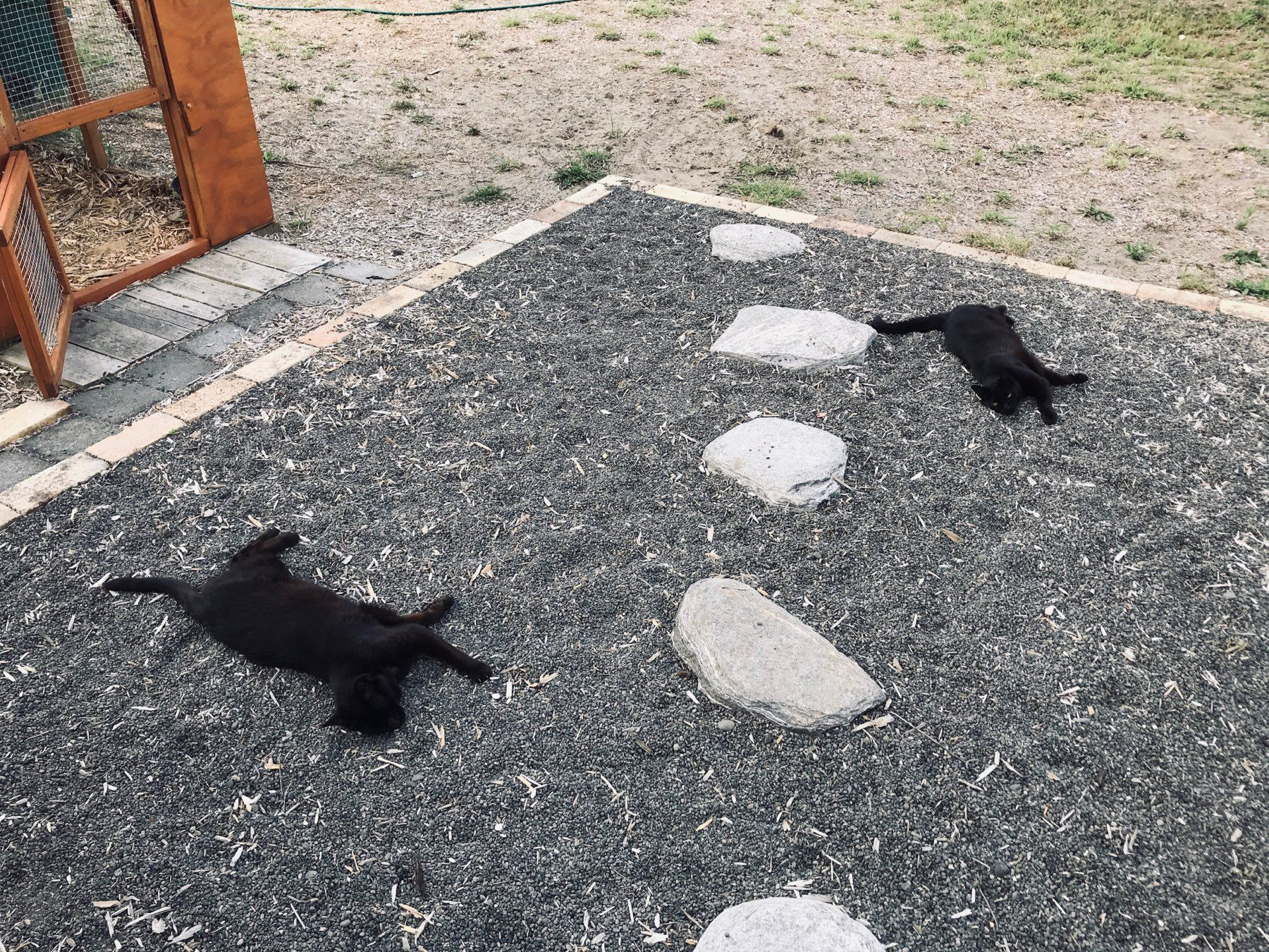 Two black cats sprawled on gravel.
