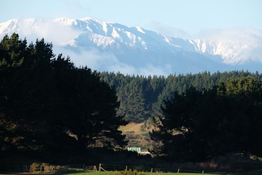 Looking across paddocks and pine trees to a snowy mountain top.