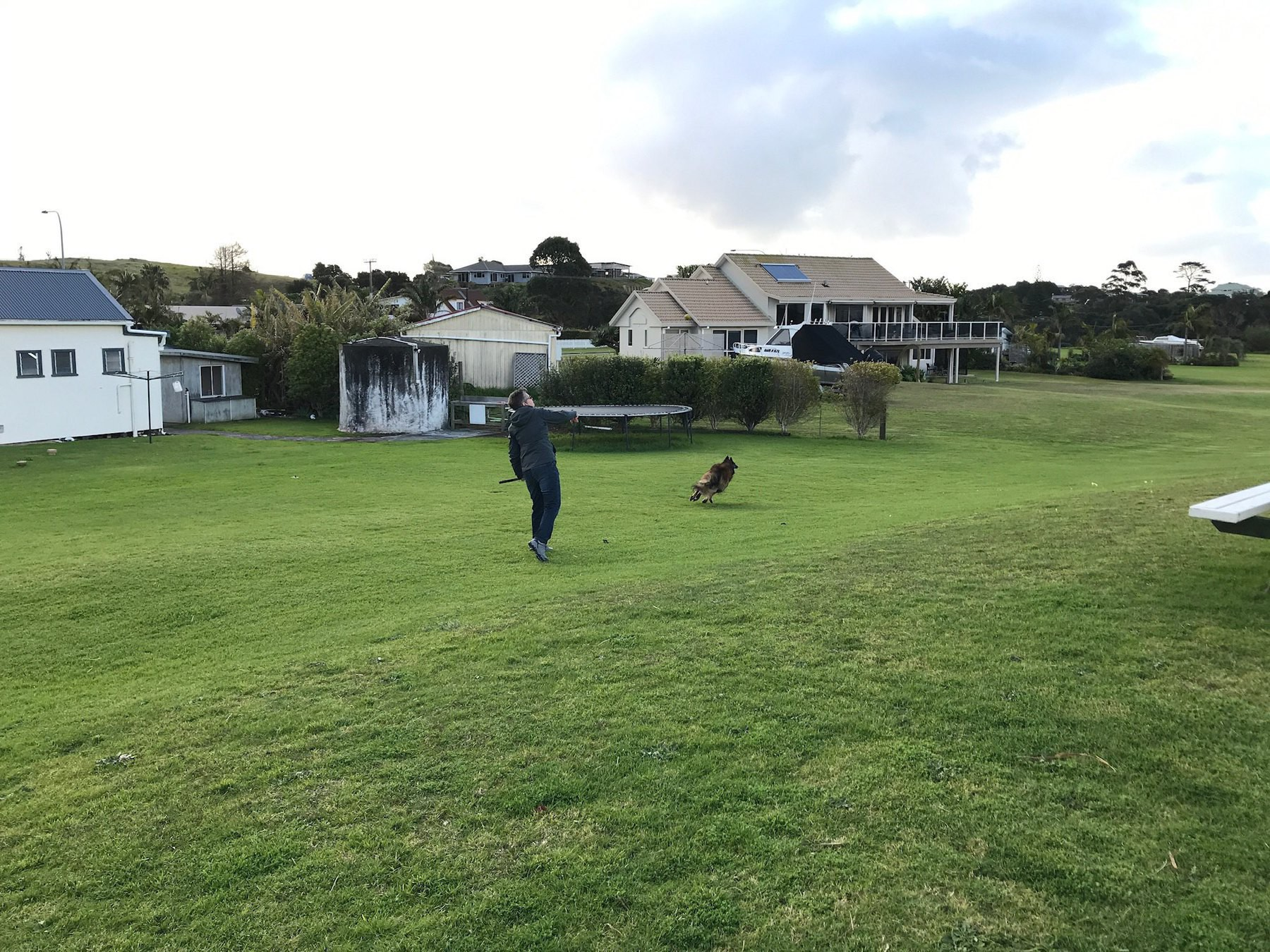 My friend throws the ball for her dog.