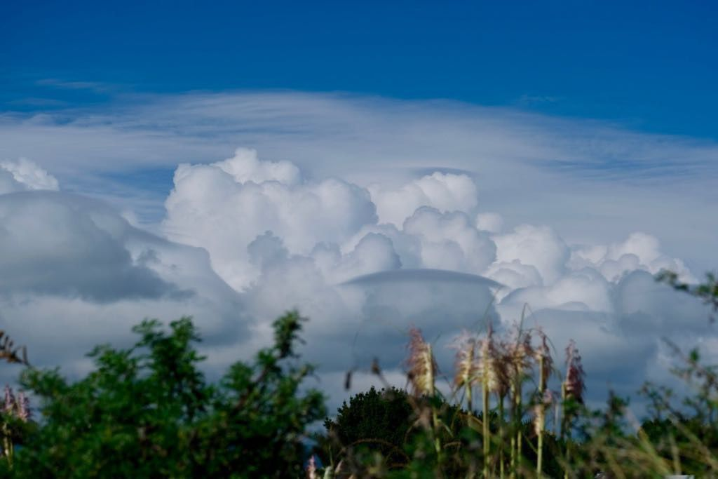 Textured clouds above vegetation and dunes.