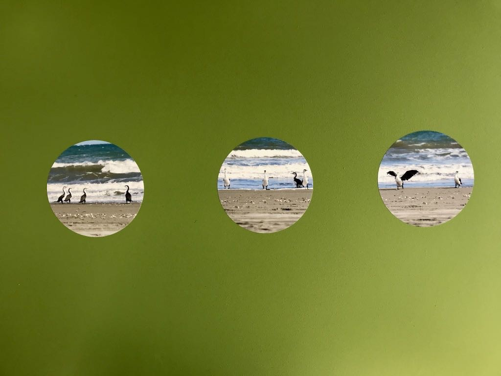 3 photos of shags as circular decals on a green wall.