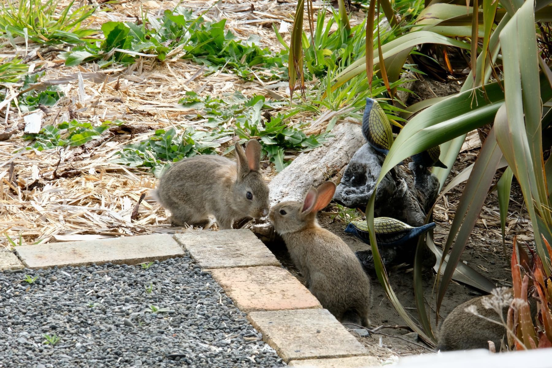 Two tiny rabbits touching noses.