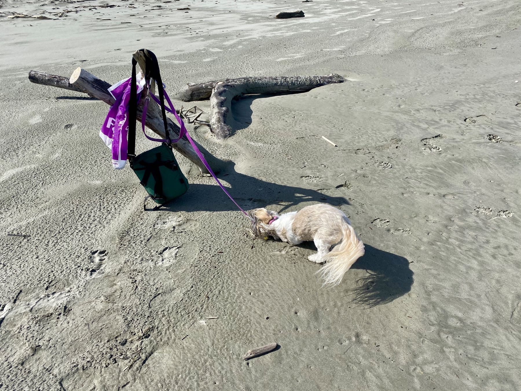 Small dog rolling on the sand.