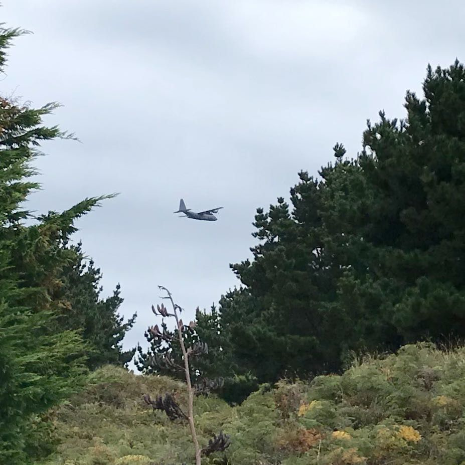 Royal New Zealand Air Force C130 Hercules aircraft about to fly behind another tree.