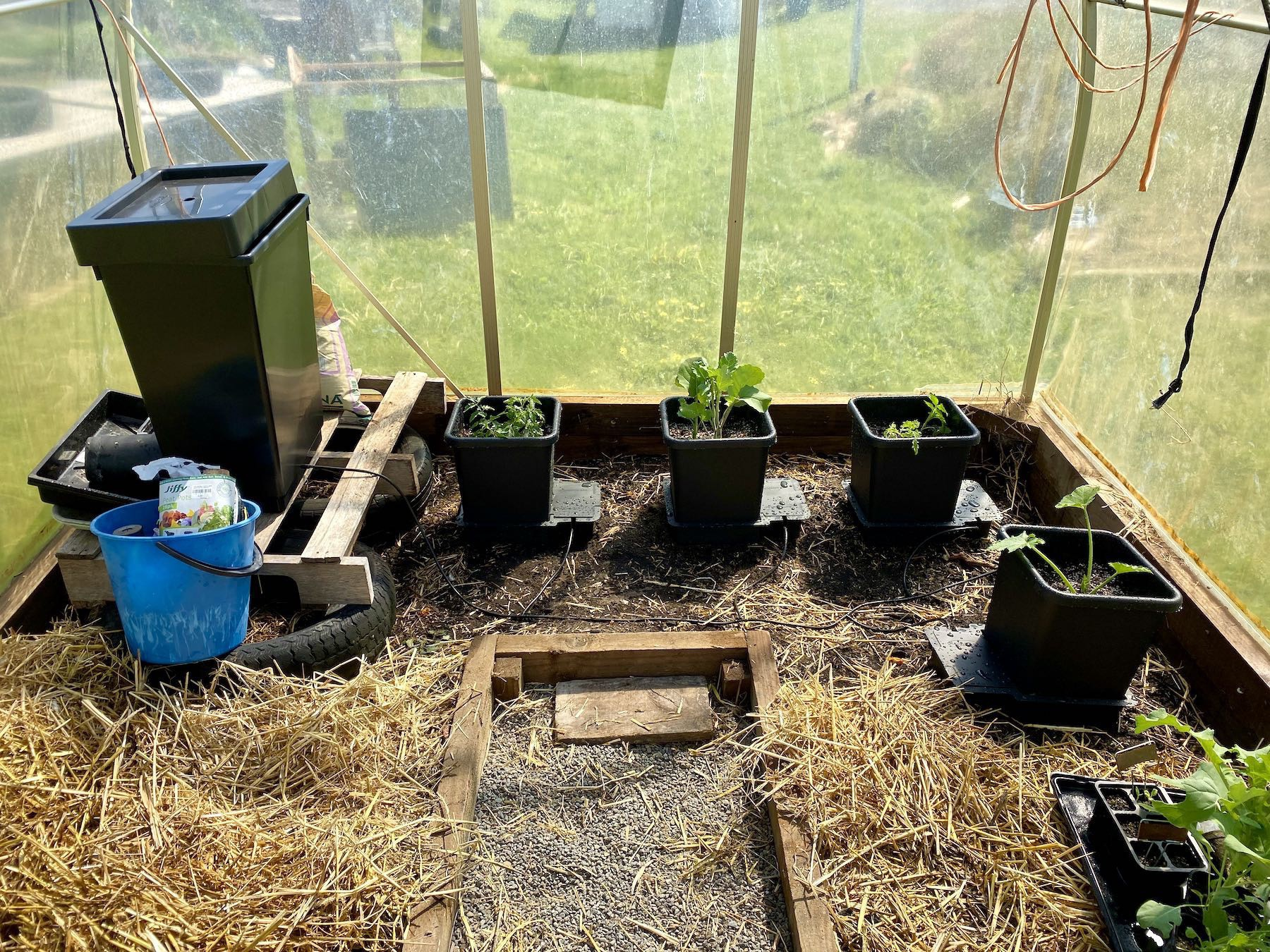The AutoPot system set up with tomatoes, broccoli and zucchini.