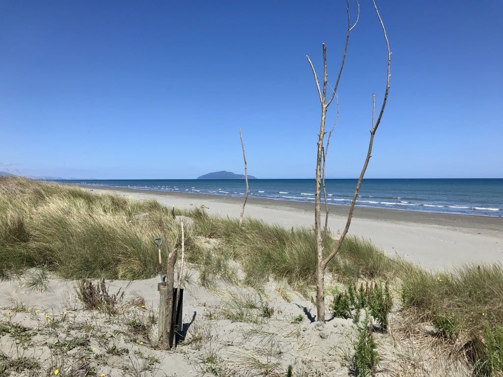 Beach with view to Kāpiti Island in the south and erect driftwood sticks to mark a track.