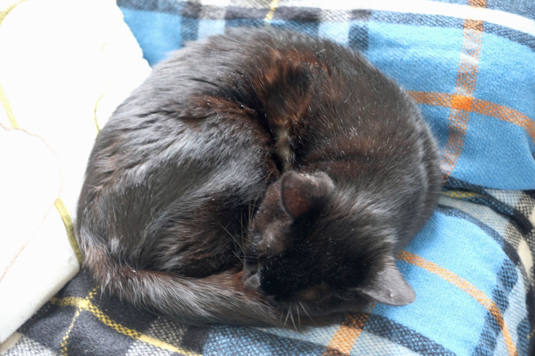 Black cat curled up on a couch.