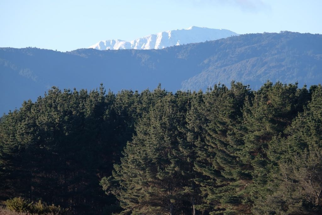 Looking across paddocks, pine trees and smaller hills to a snowy mountain top.