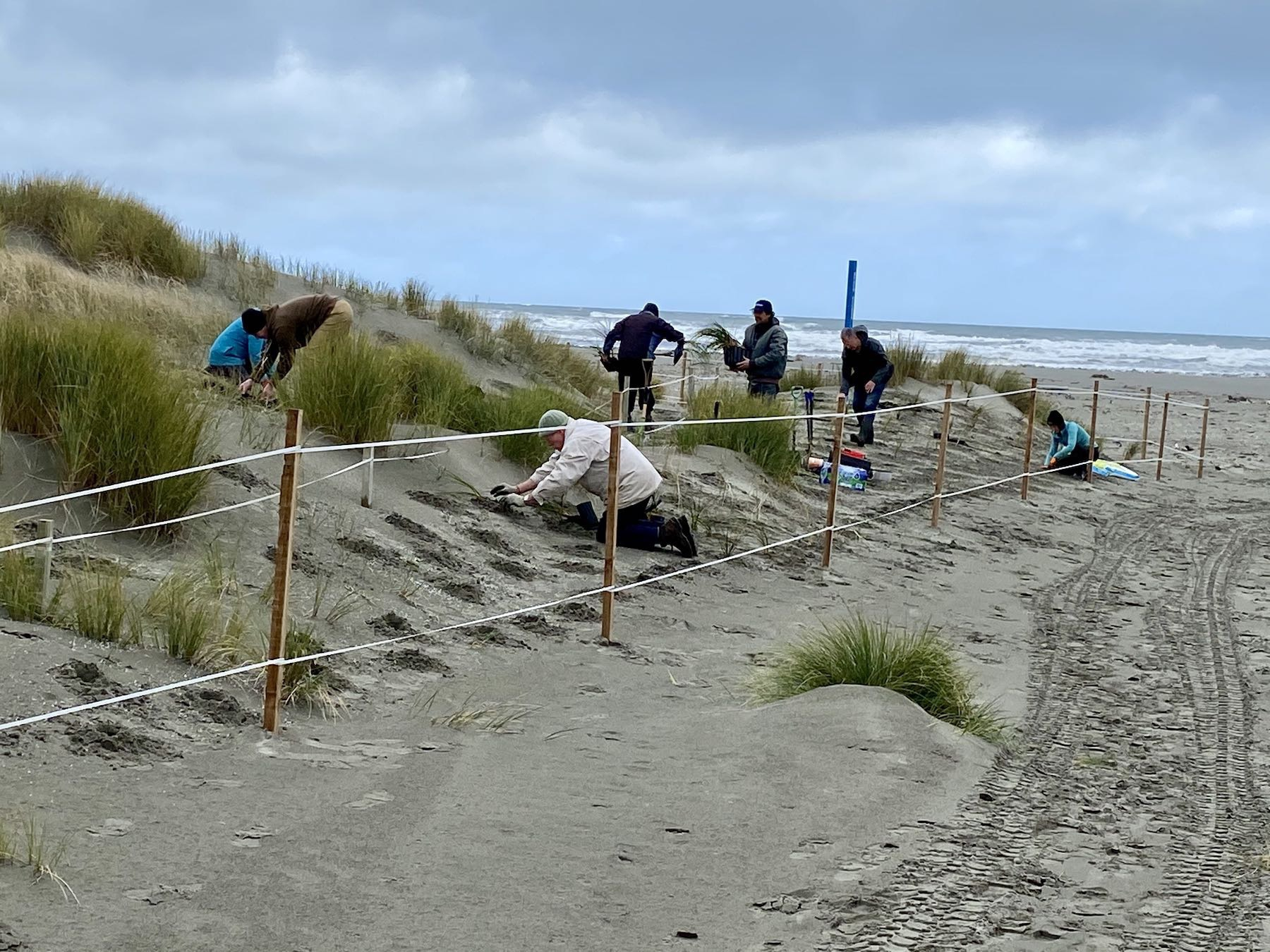 Seven people planting in the dunes.