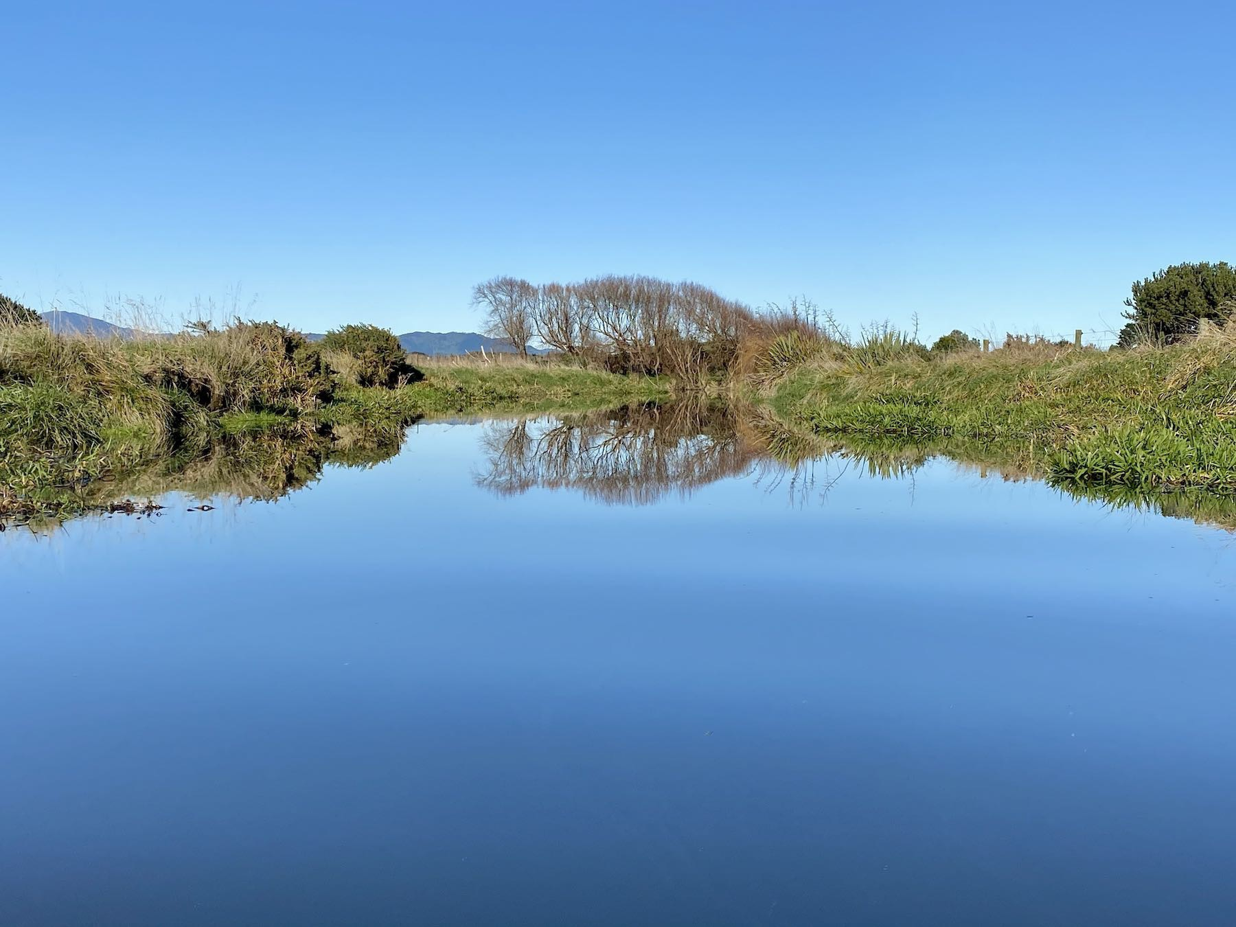 Still blue water, blue sky, reflected vegetation, including bare willow trees.