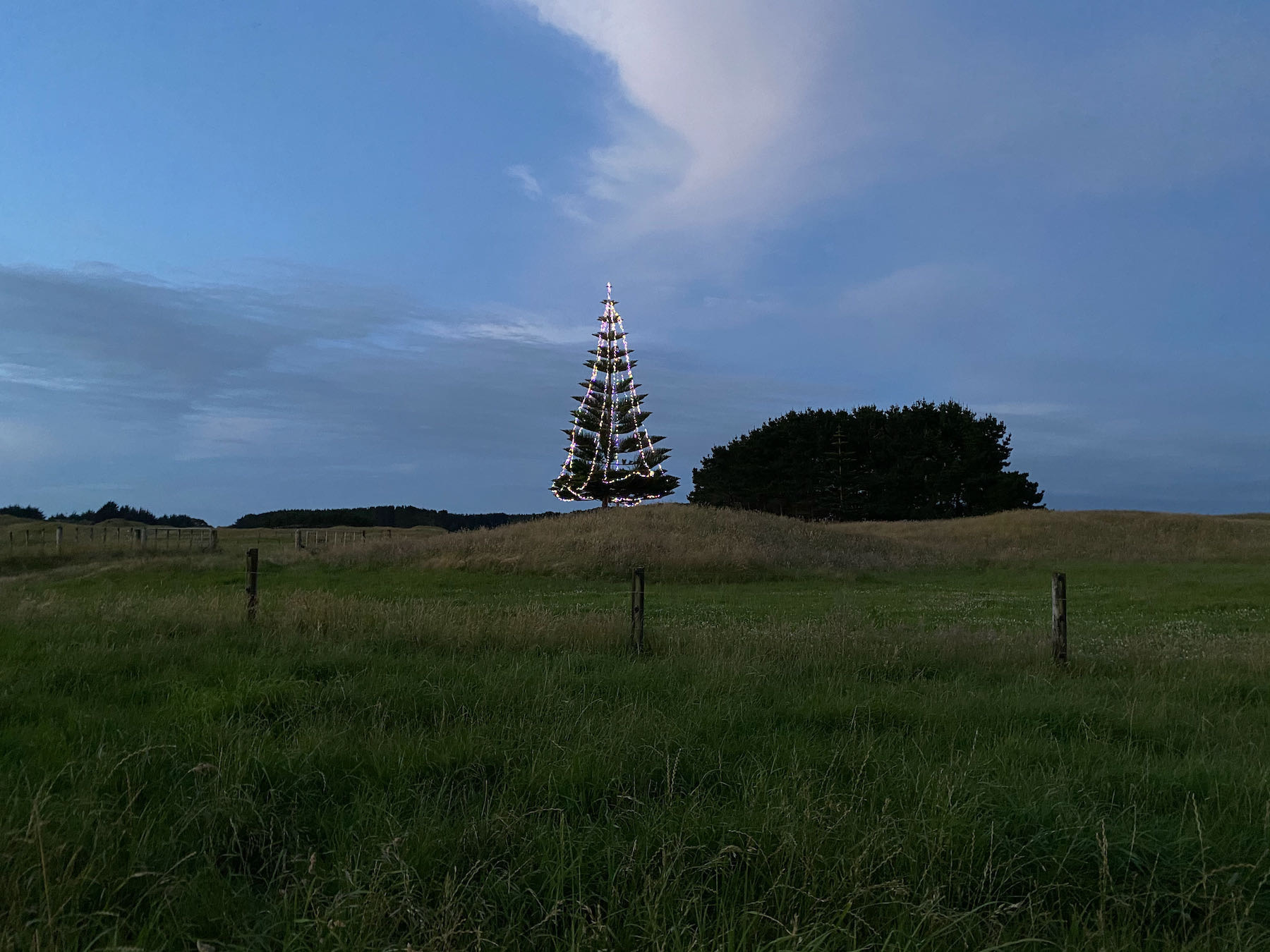 Large tree covered with lights, alone in a paddock.