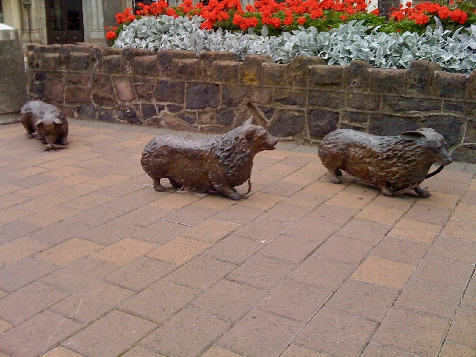 Sculpture of 3 perhaps bronze corgis walking along the street on their own.