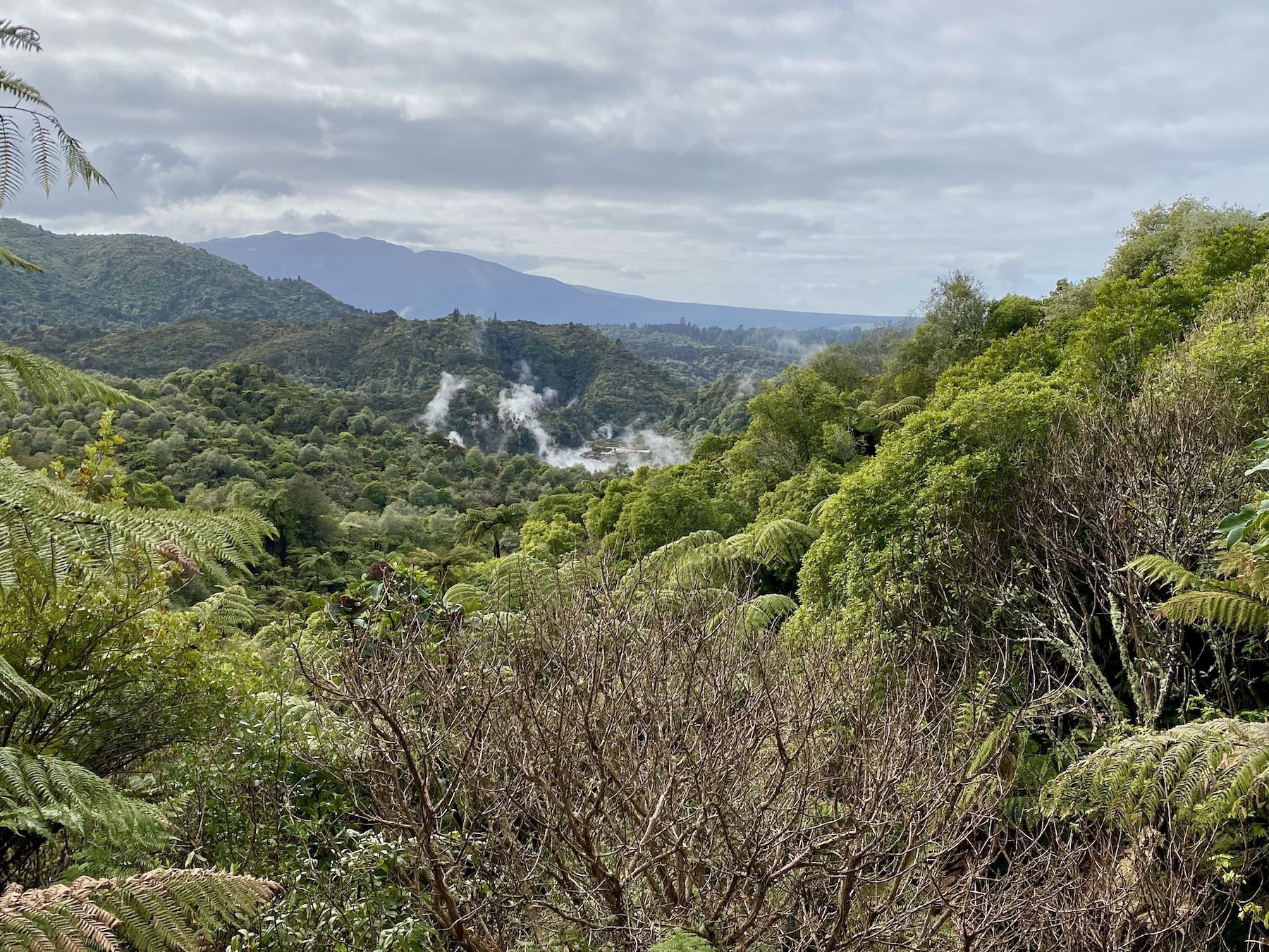 Looking across a bush-clad valley with volcanic steam.
