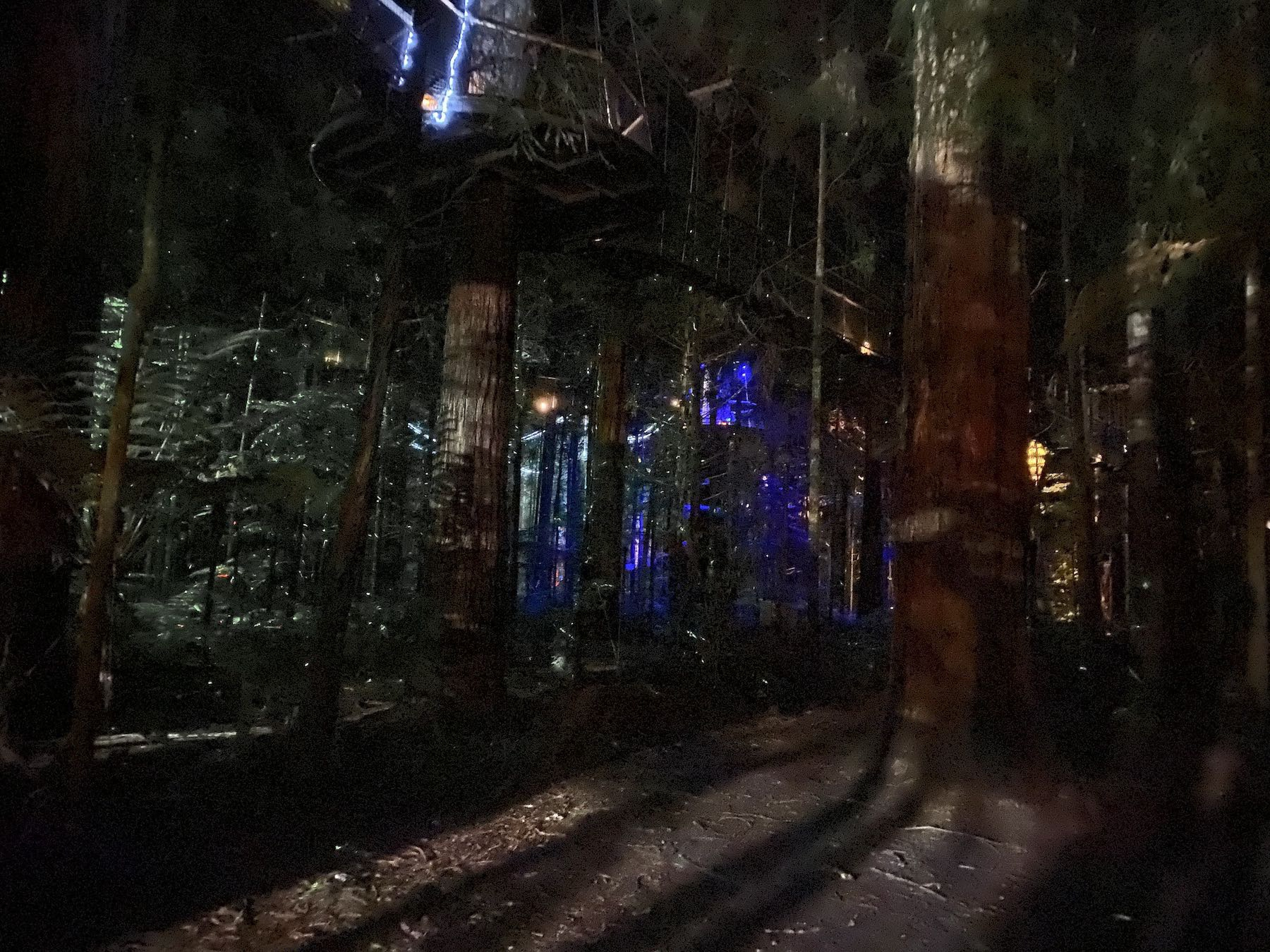 Redwood trees with tiny multicoloured moving lights.