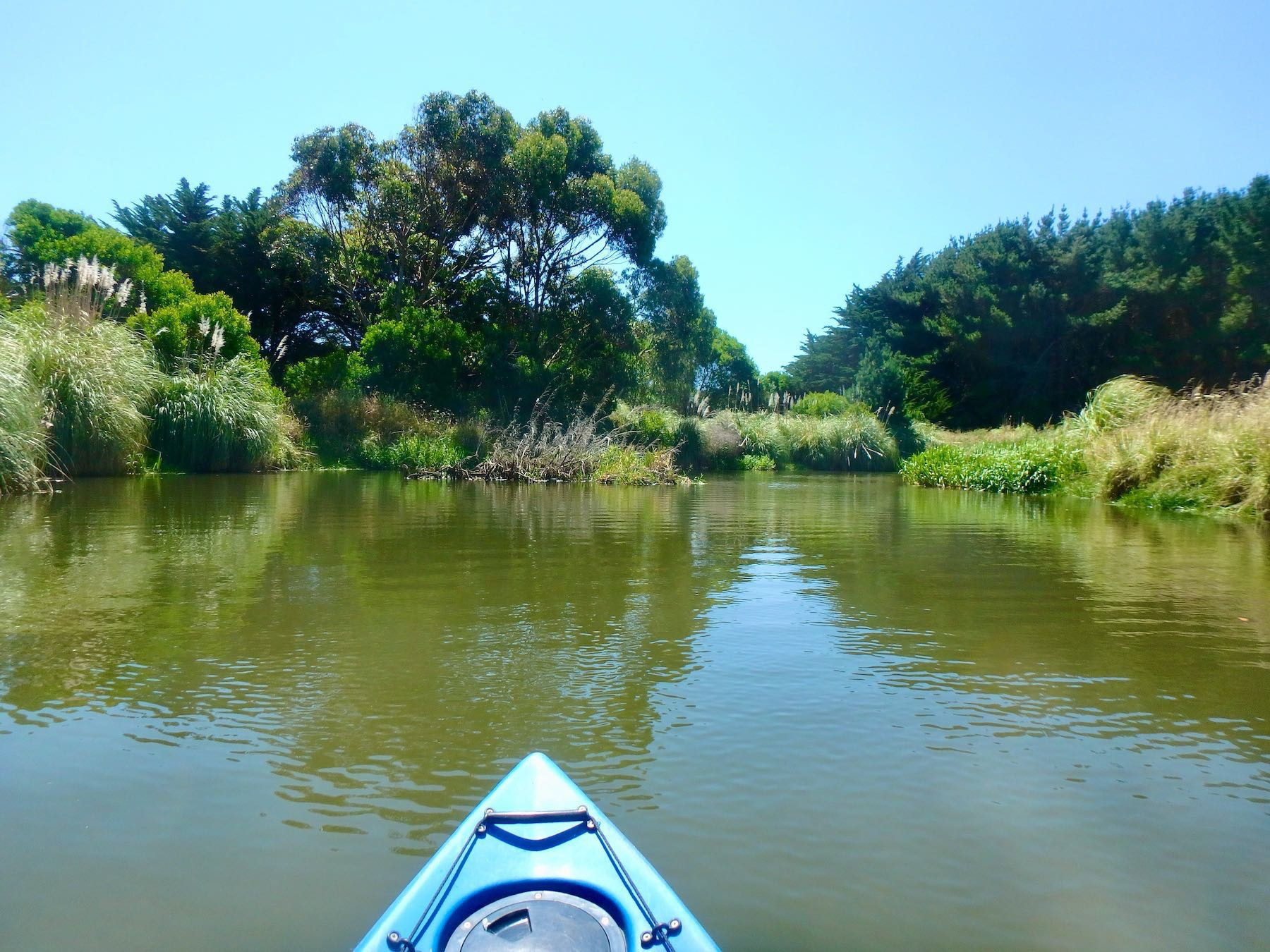 View of trees and shrube beside river from kayak.