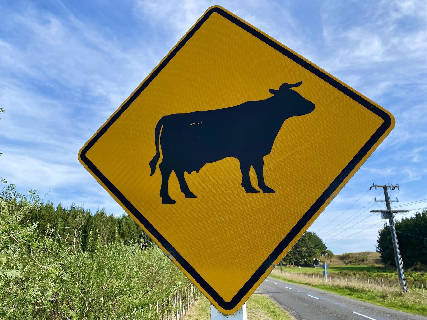 Traffic sign with yellow background warning of cows ahead.