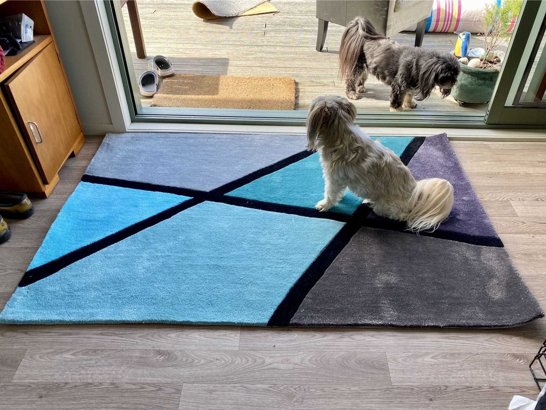 Small pale dog on a multicoloured rug.