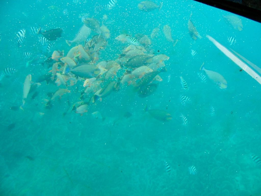 A swarm of tropical fish as seen from the sub.
