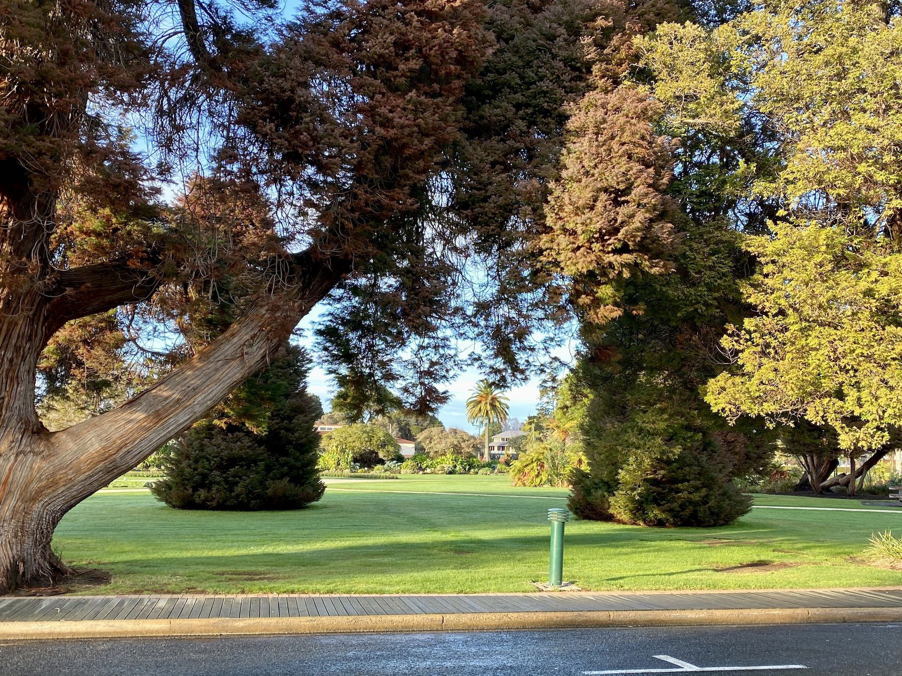 Various trees and a green lawn.