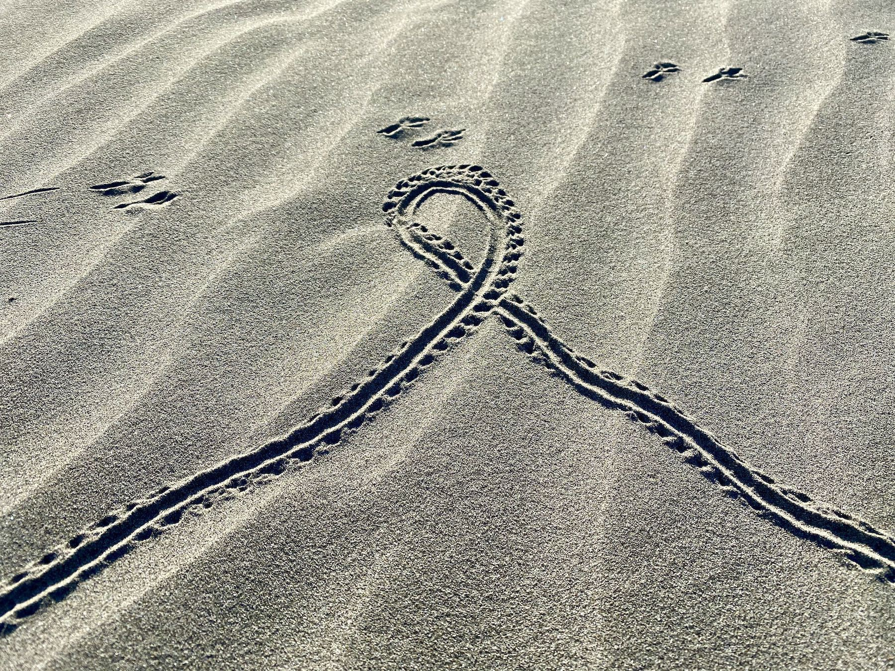 Tracks of a crab and a bird. Lines from wind blowing sand.