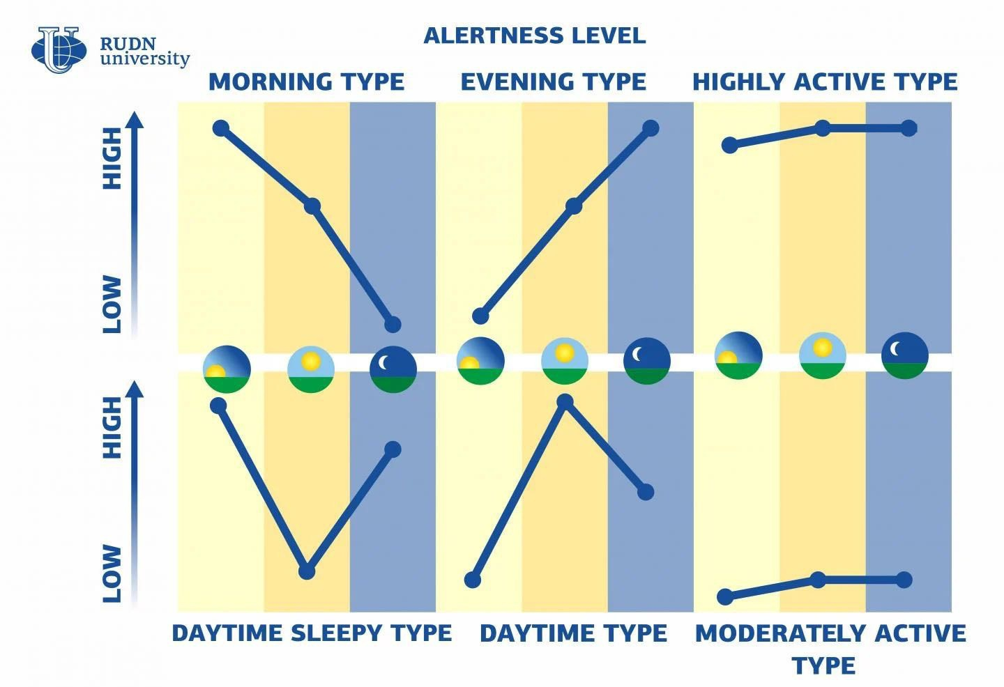 Chart of chronotypes.
