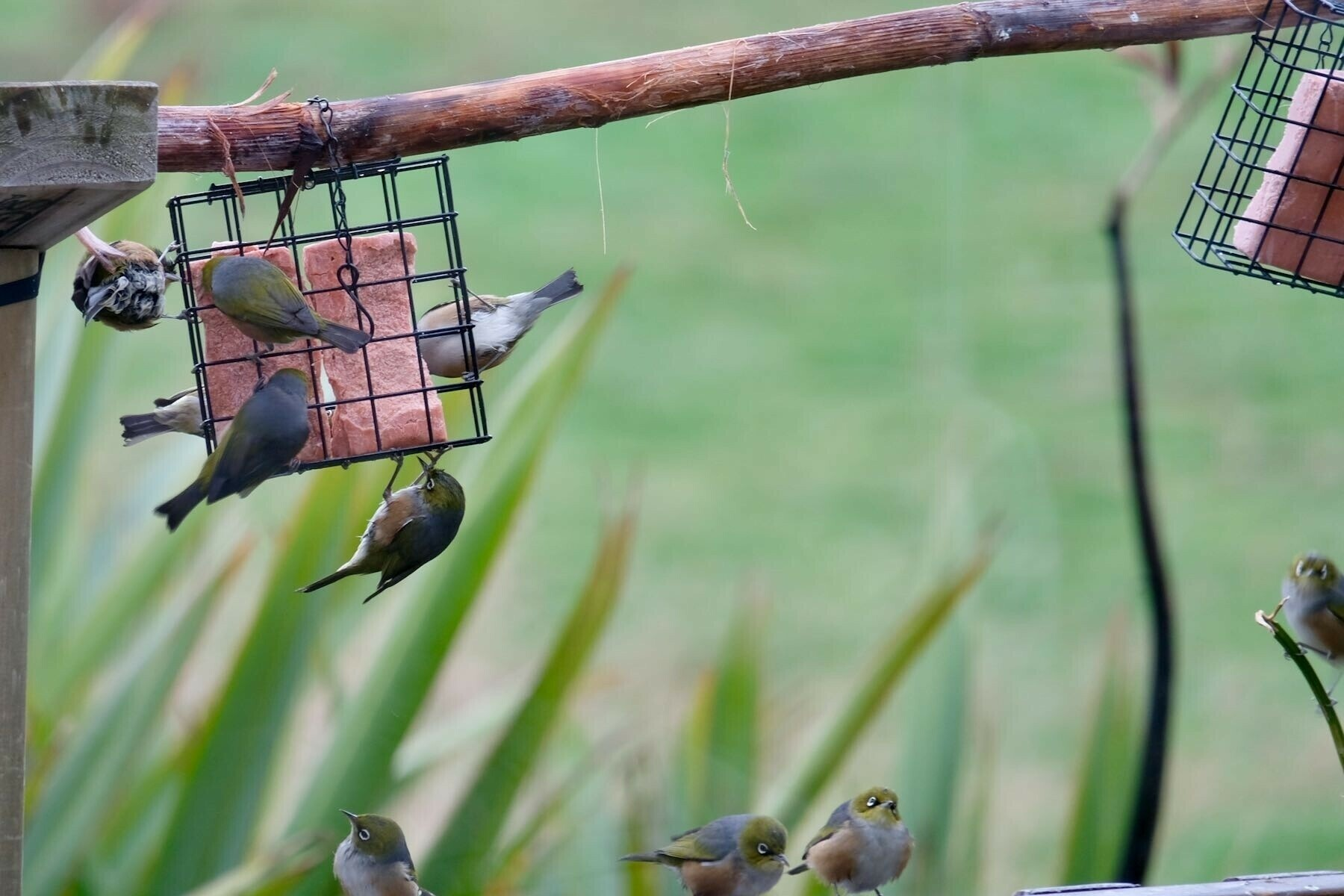 Many tiny birds on and near the feeder.