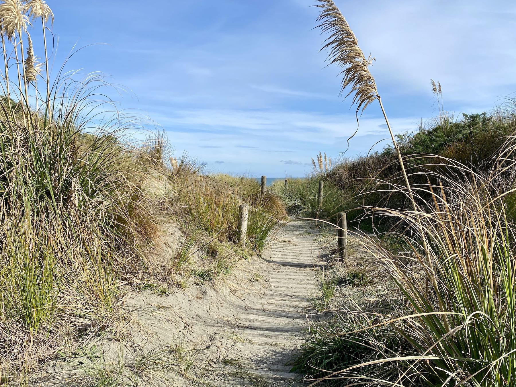 Wooden track through beach grasses with the sea just visible.