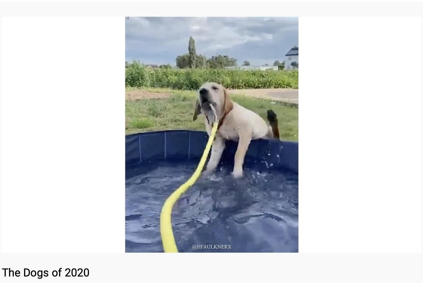 Dog in a paddling pool.