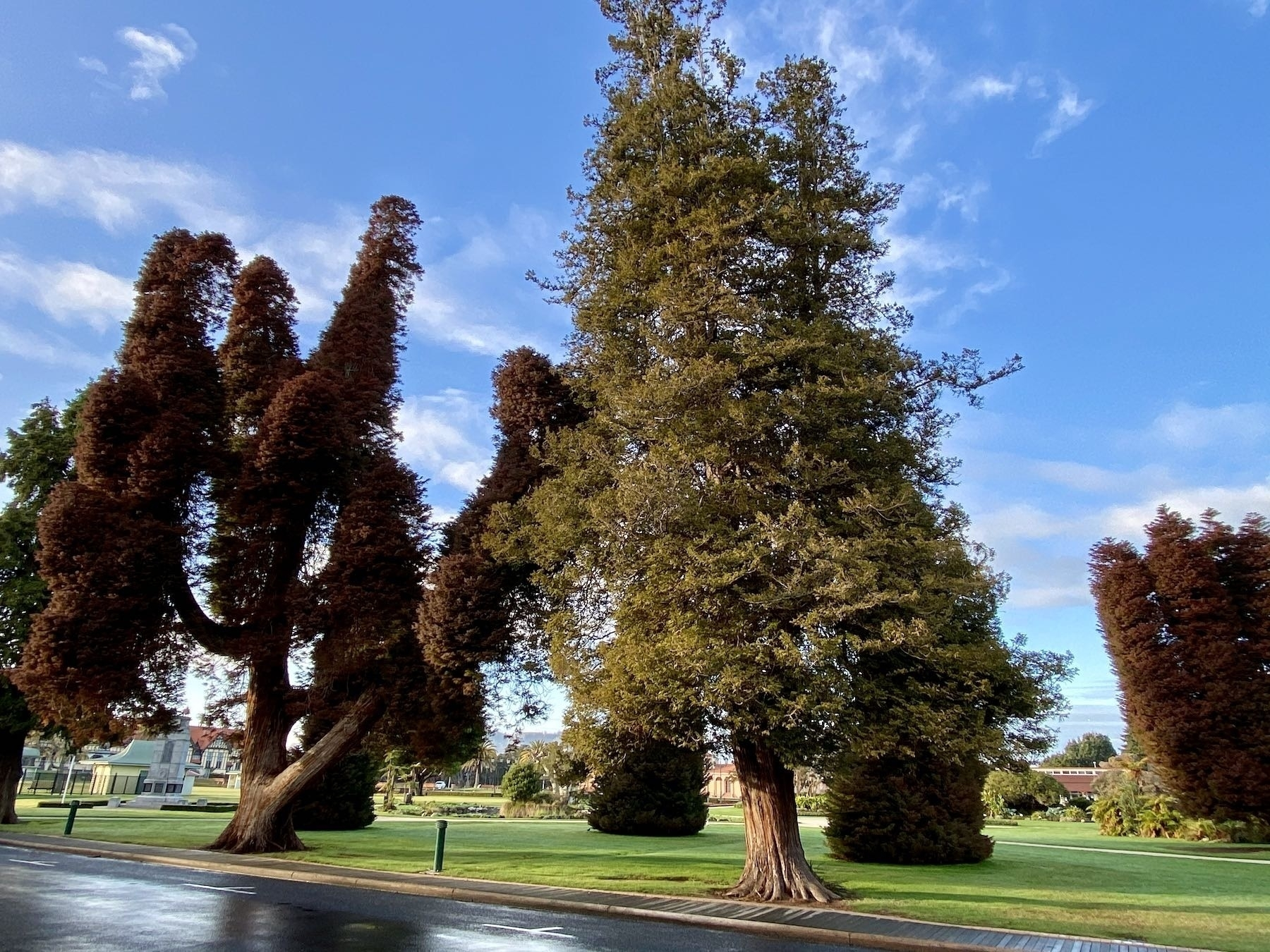 Trees with interesting shapes.