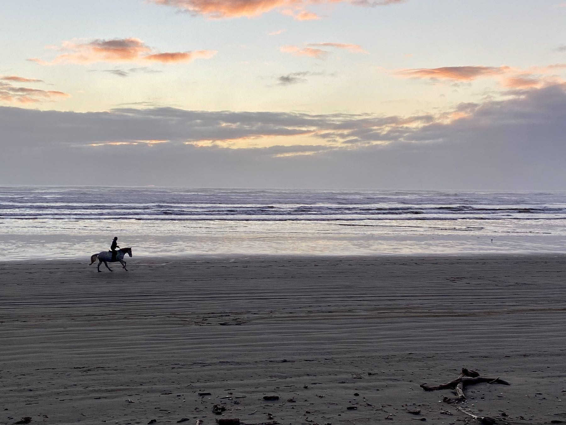 Horse at the edge of the sea, with rider standing up on the stirrups.