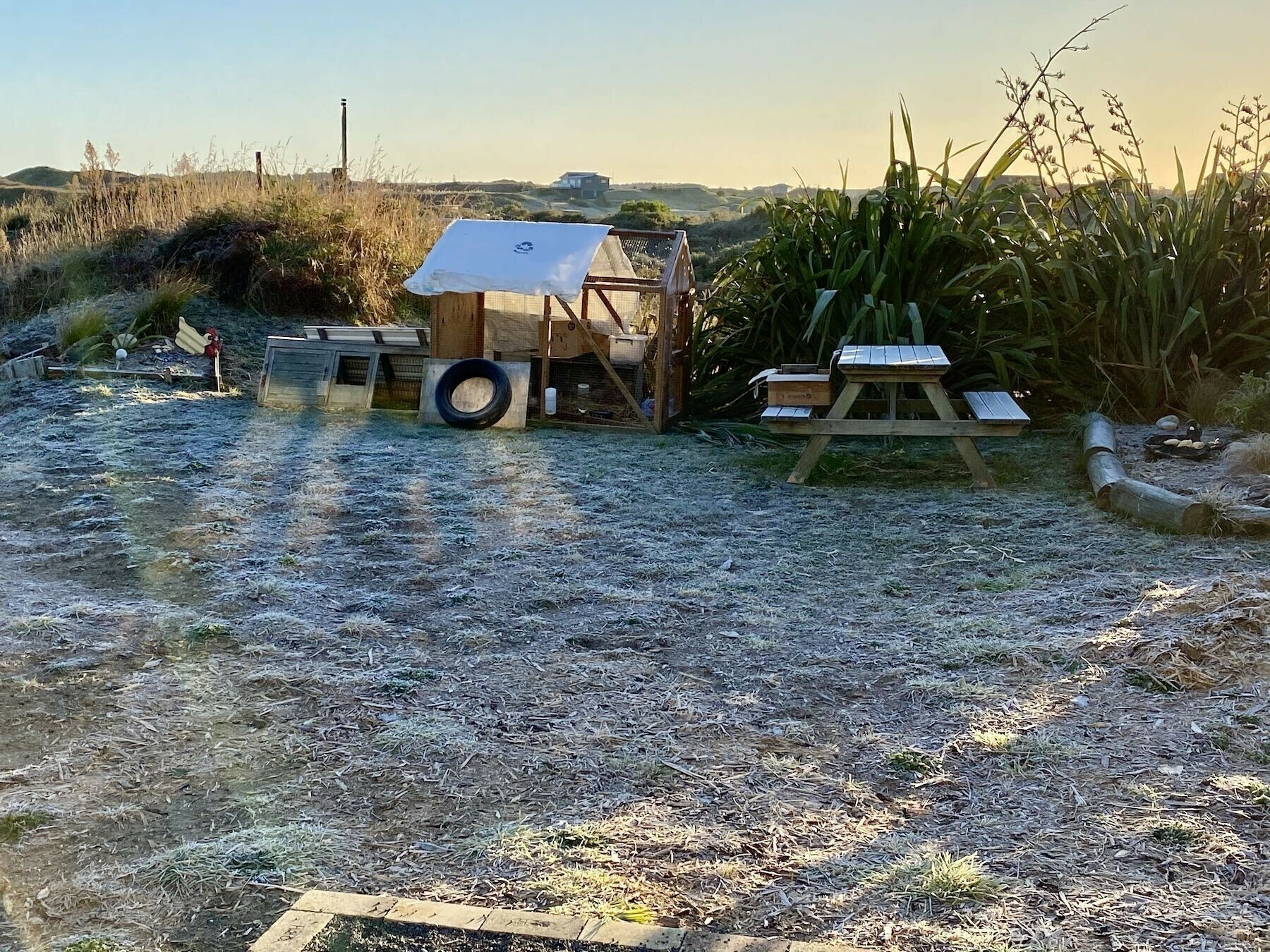 Frost covered grass. Quail run in background.