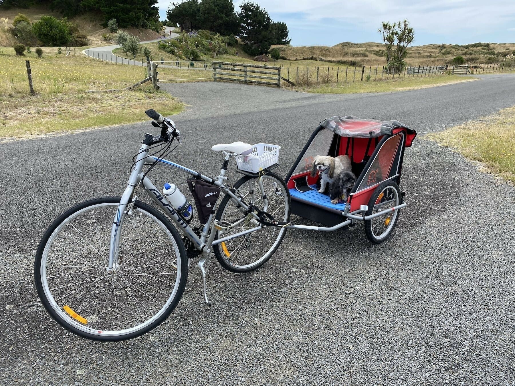 Older Avanti bike with dogs in attached trailer.