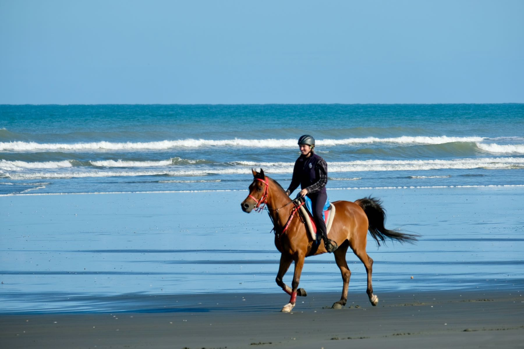 Brown Arab horse with rider on the beach by the sea.