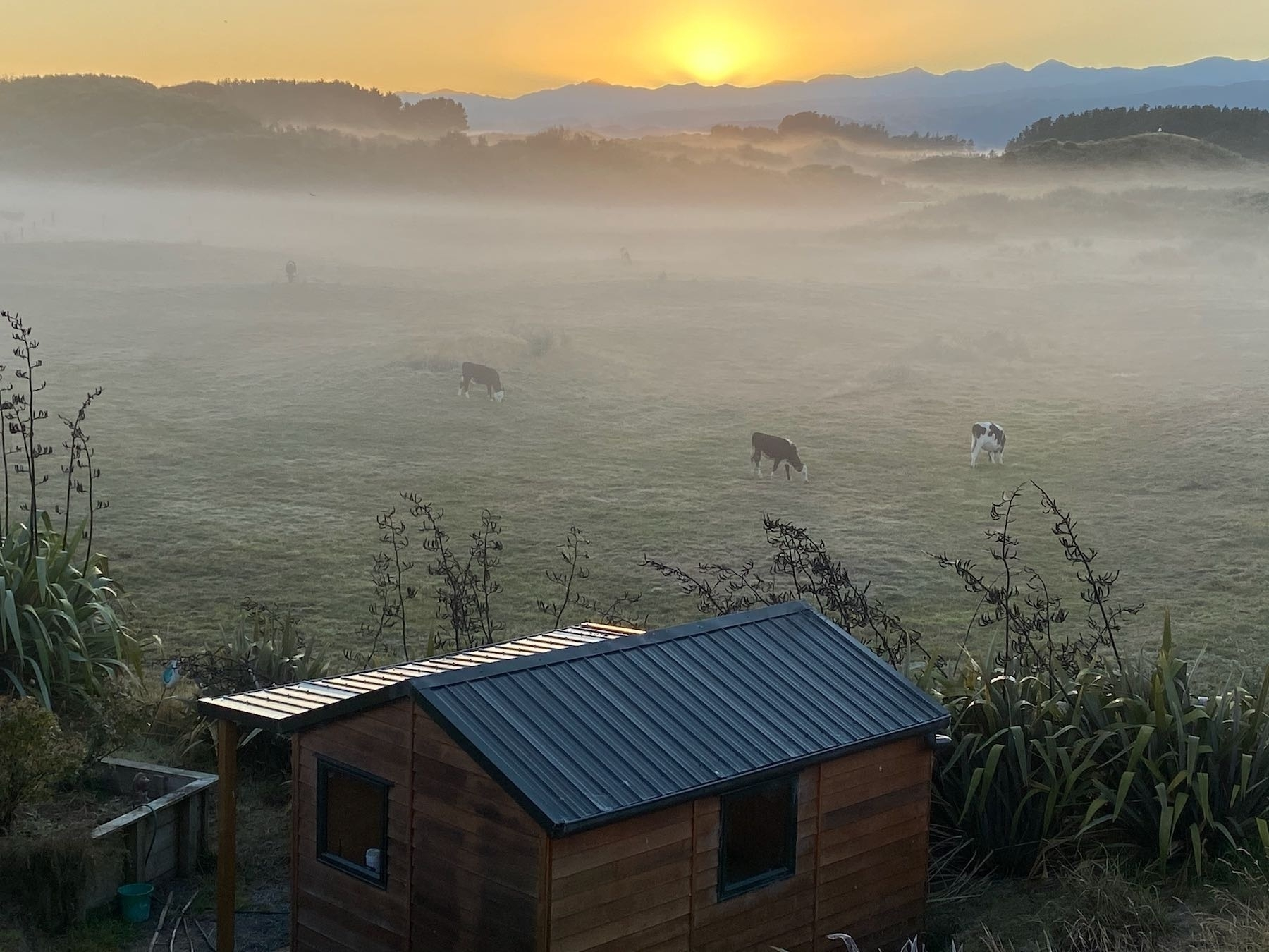Sun rising behind mountains, cows in misty paddocks, a small building in the foreground.