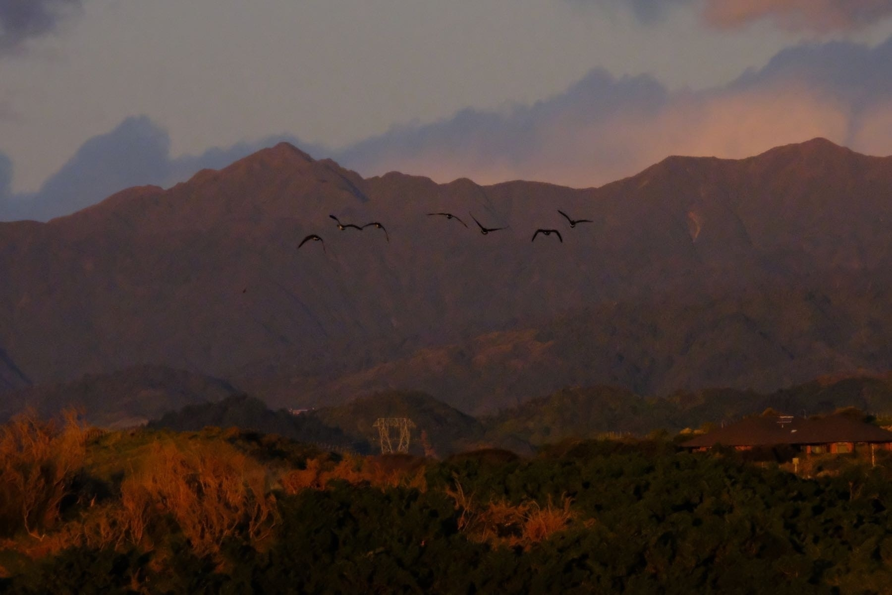 Half a dozen geeese in flight above a red sunlit paddock with red-tinged mountains behind.