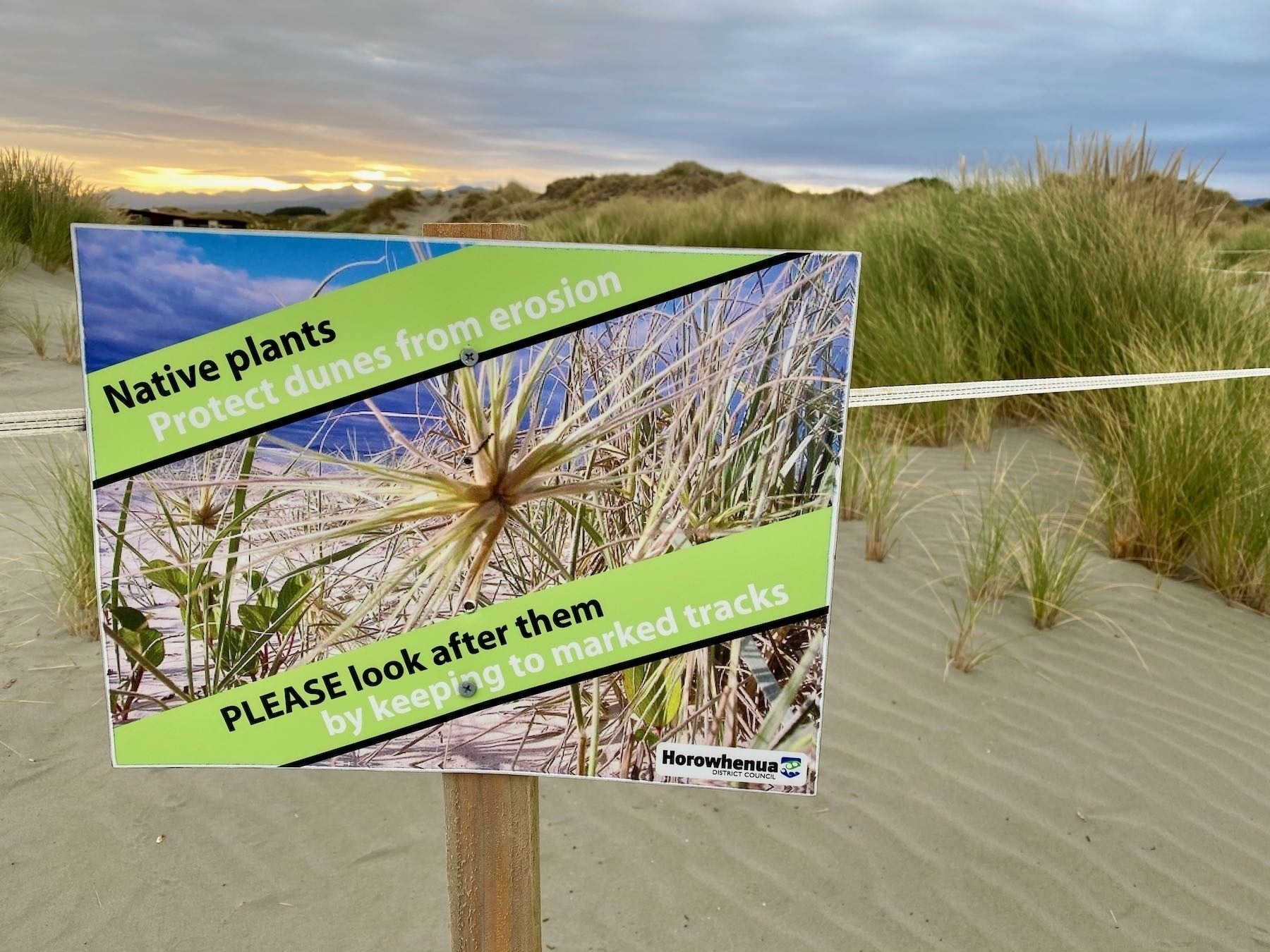 Taped off dunes and a sign asking people to look after the native plants that protect dunes from erosion by keeping to the tracks.