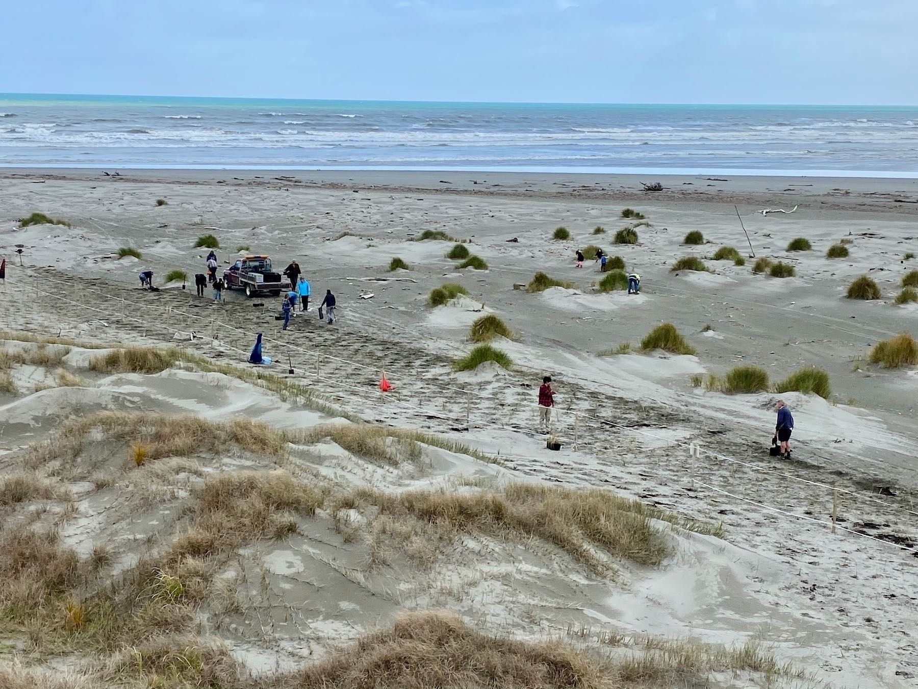A view of planting from the top of a nearby sand dune.