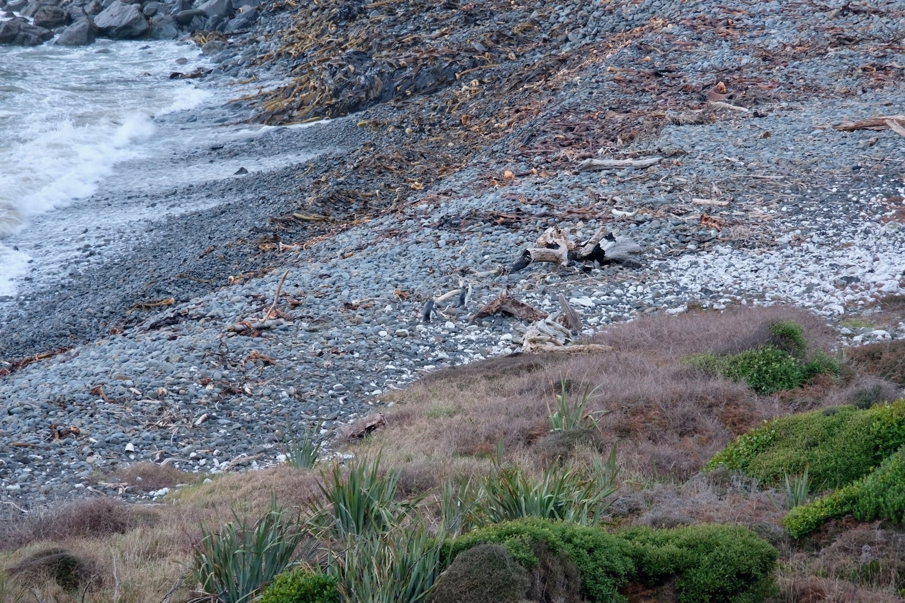 A distant pair of penguins on a shingle beach.